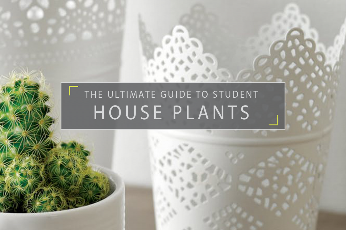 The Ultimate Guide to Student House Plants
